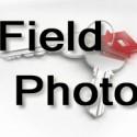 fieldphoto